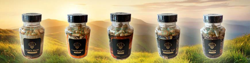 paddenstoelen supplementen assortiment